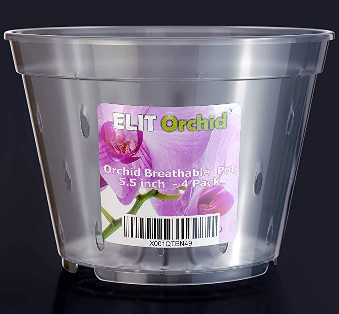 Elit Orchid 5.5 inch pots