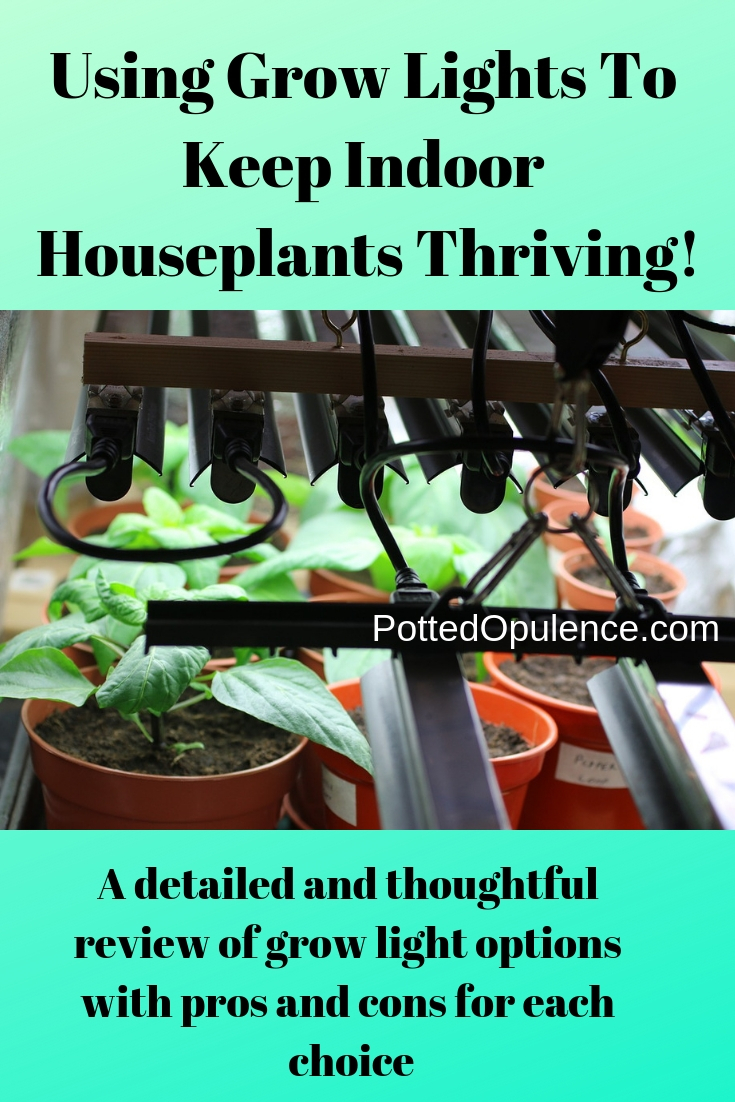 grow lights for houseplants