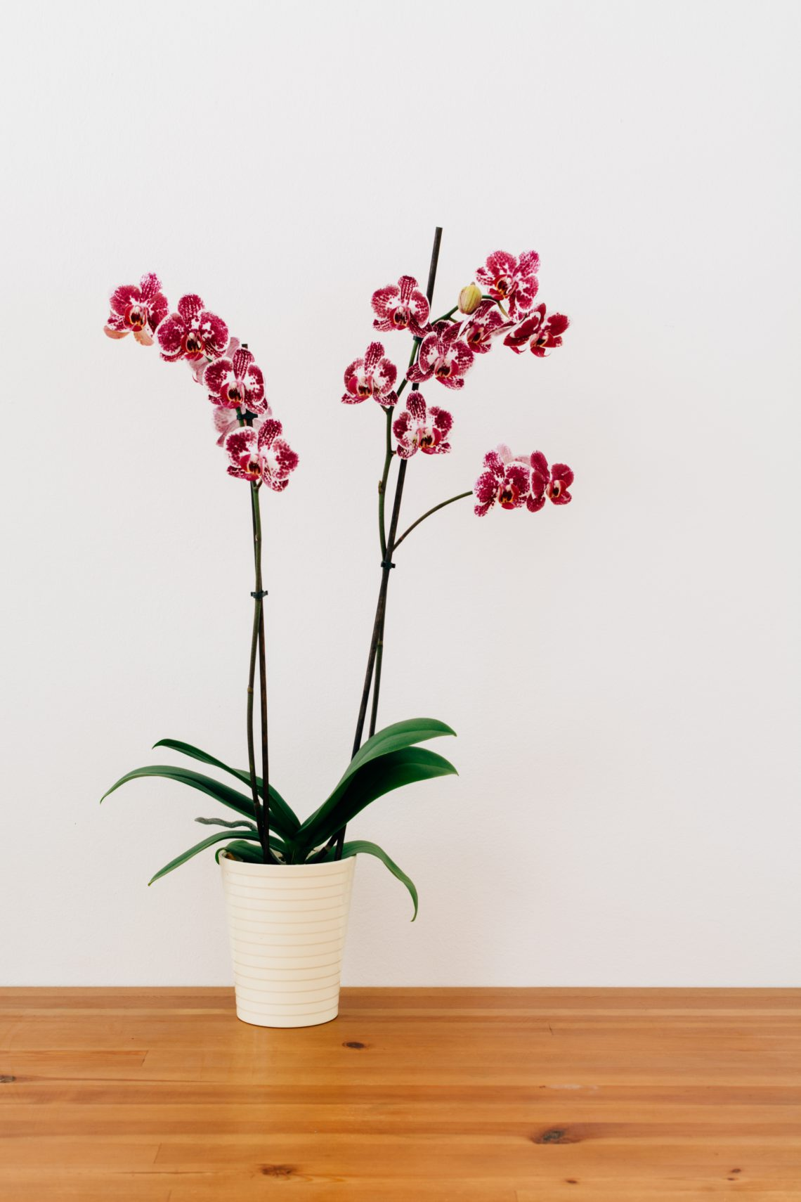 choosing the right orchid pot
