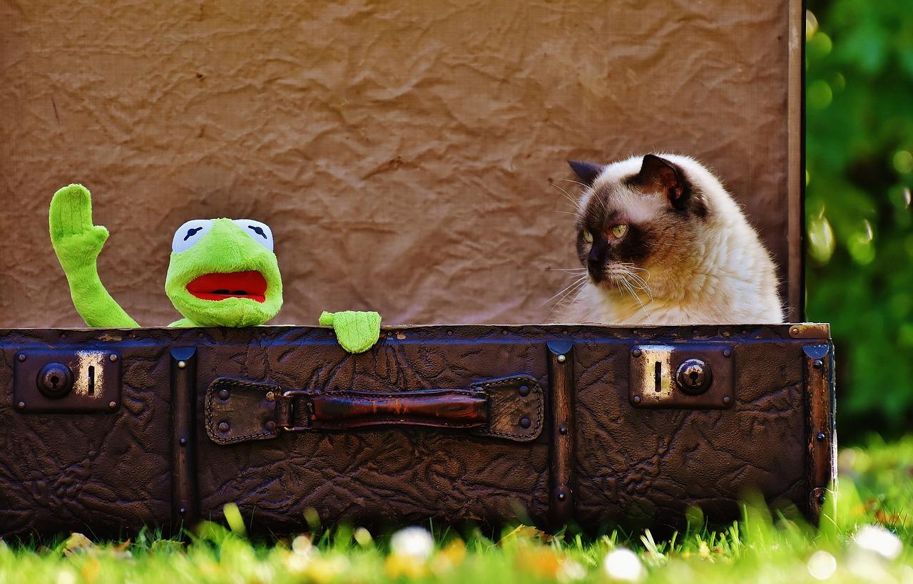 kermit & cat