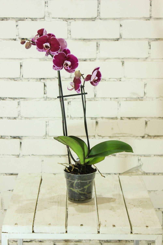 proper orchid pots