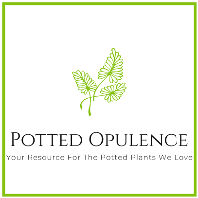Potted Opulence