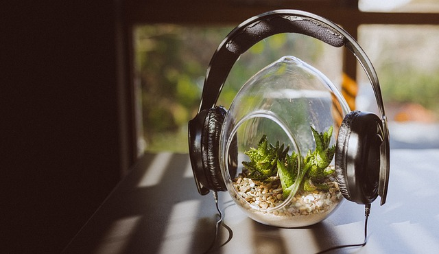 headphones on plant