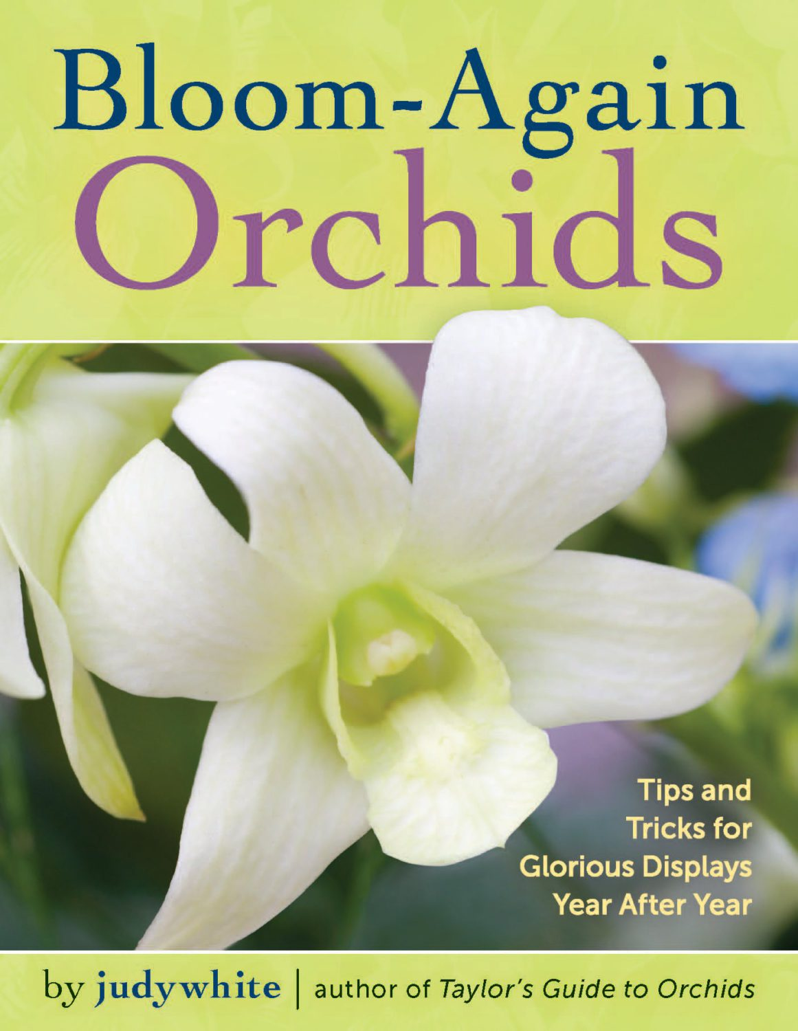 make my orchid bloom again