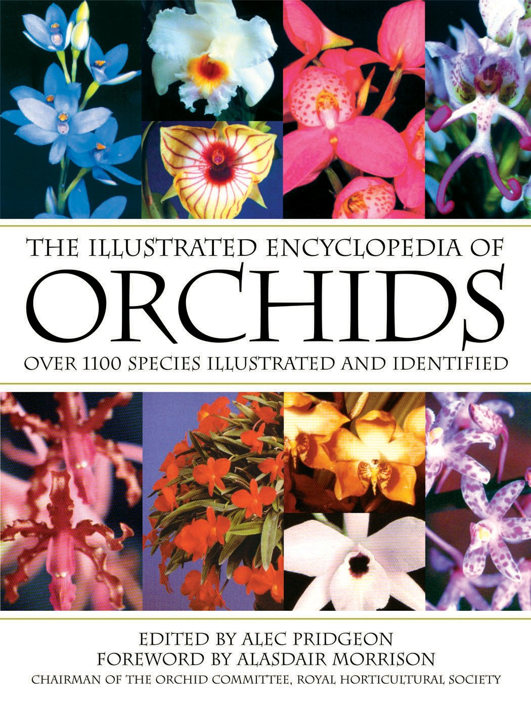illustrated orchid encyclopedia