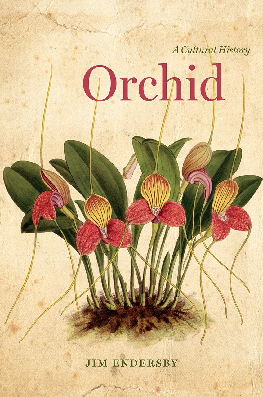 orchid history