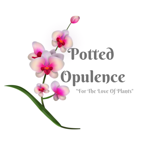Potted Opulence-For The Love Of Plants