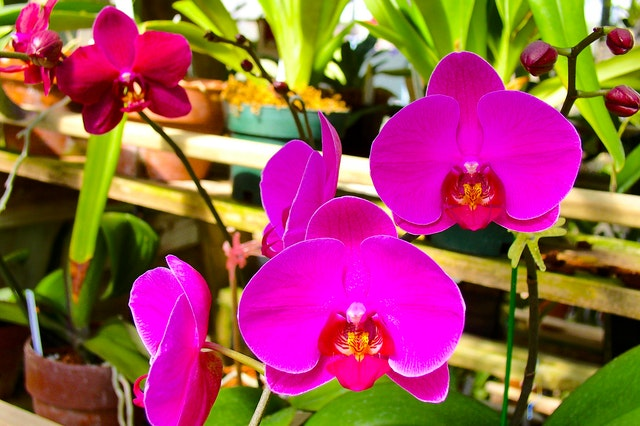 Live Orchid Plants For Sale