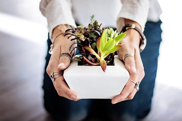 succulents for sale online