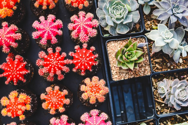 Succulents For Sale Online