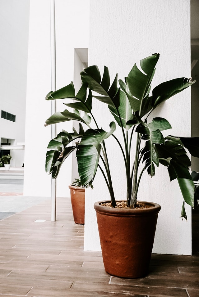 houseplants for healthy home
