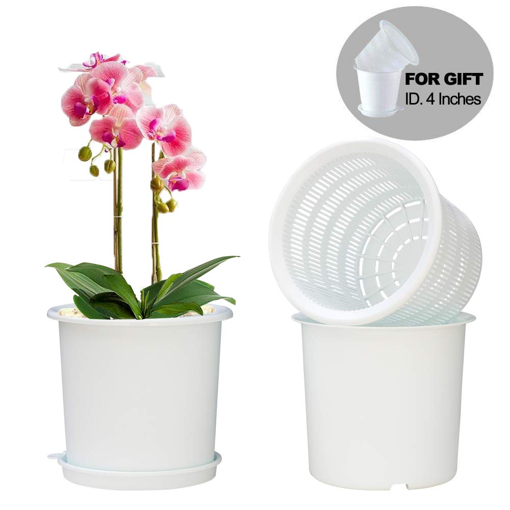 meshpot orchid pots
