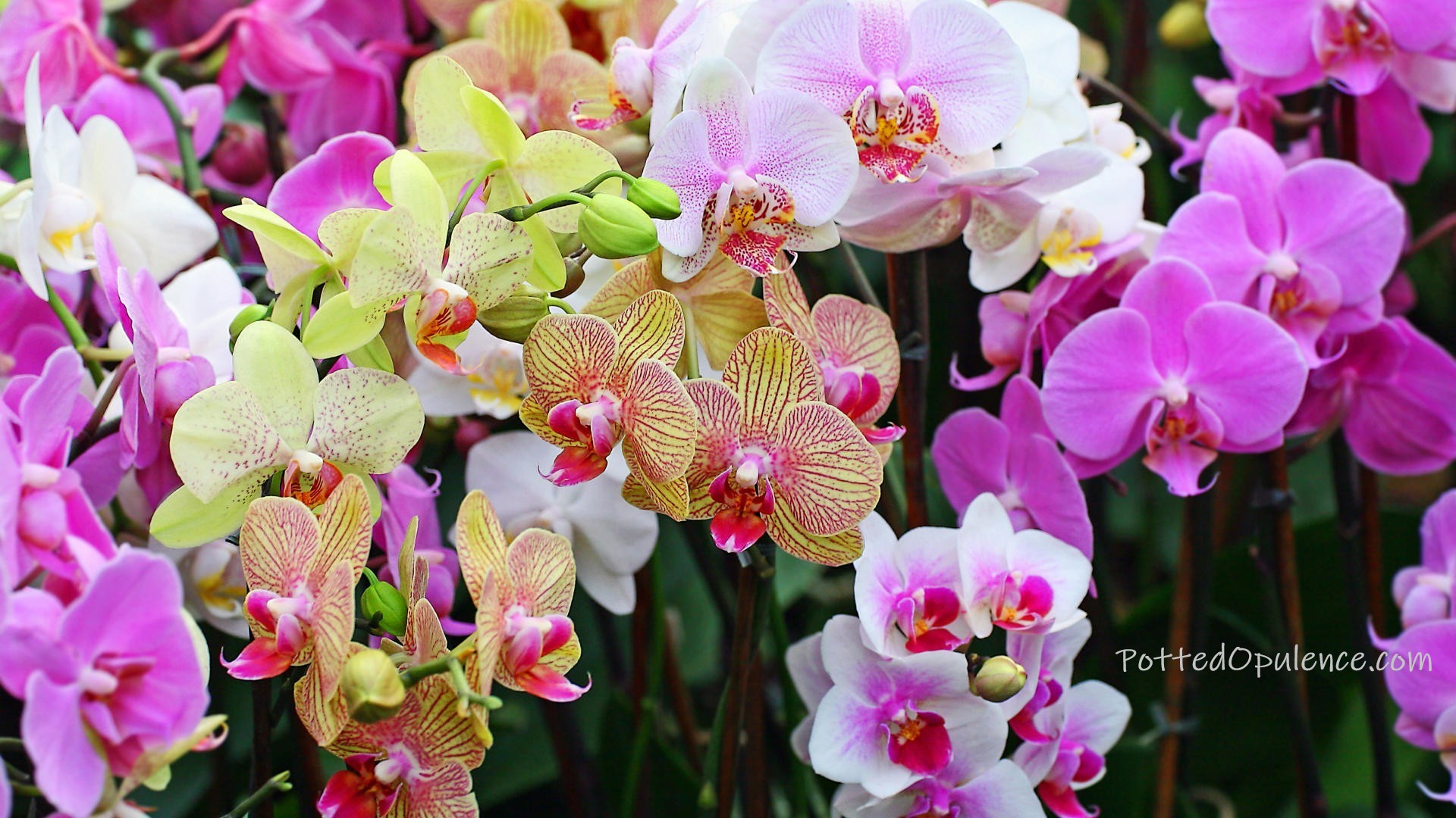 orchid wisdom