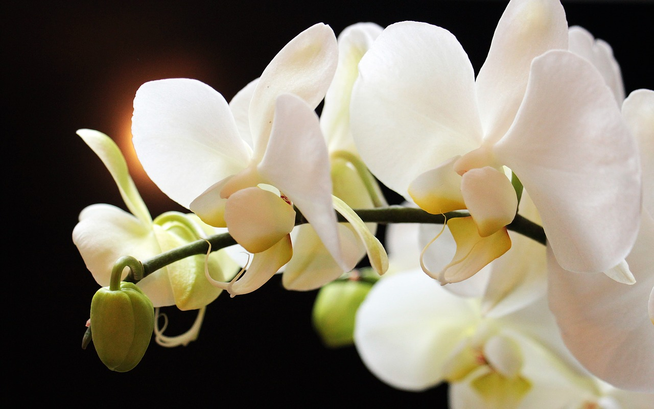 Orchid Wisdom: Uniqueness & The Beauty of Simplicity