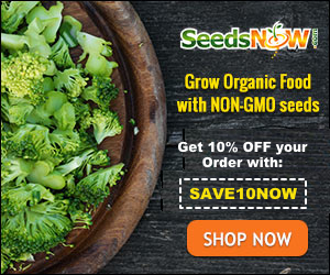 buy seeds now